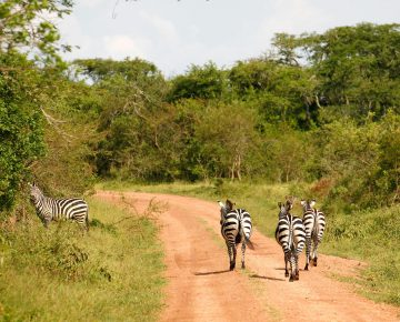 10 Days Best Uganda Adventure Safari