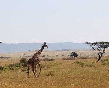 12 Days Vacation in Uganda