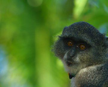 18 Days East African Highlights Safari