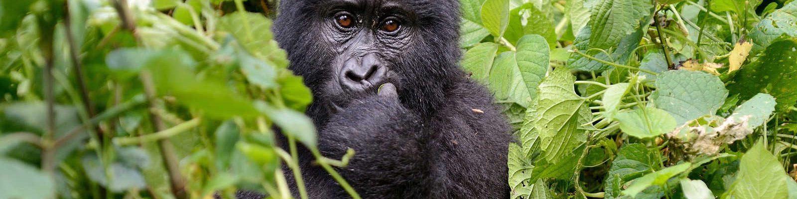 2 Days Kigali to Bwindi Gorilla Trekking