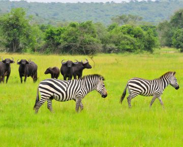 2 Days Lake Mburo Wildlife Safari