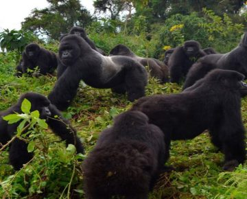 2 Days Rwanda Gorillas & Bisoke Hike