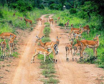 3 Days Akagera Wildlife Safari