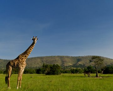 4 Days Akagera National Park Safari