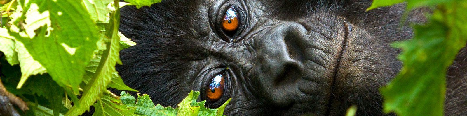 4 Days Rwanda Gorilla Trek