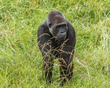 5 Days Congo Special Safari