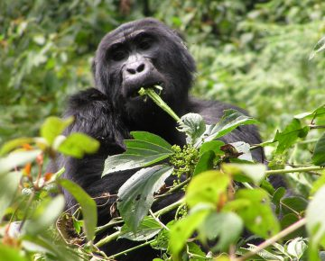 6 Days Rwanda Adventure Safari