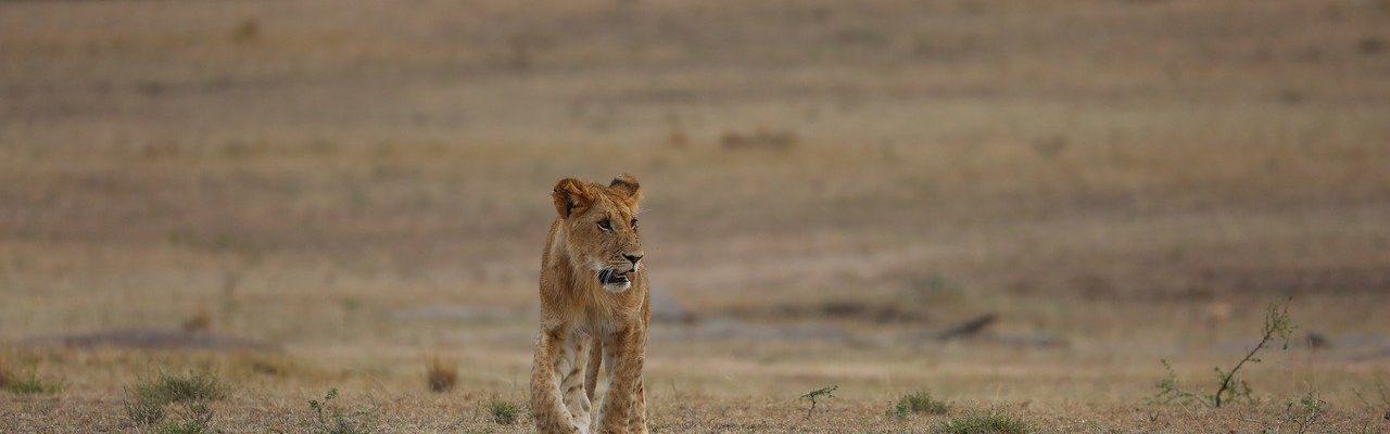 7 Days Bwindi & Maasai Mara Safari