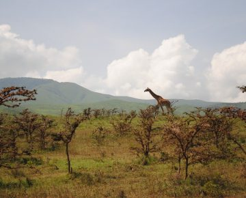 7 Days Uganda Wildlife & Primates Safari