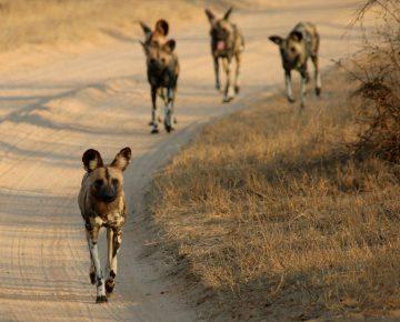 8 Days Classic Rwanda Safari