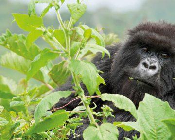 9 Days Rwanda Gorilla Holiday