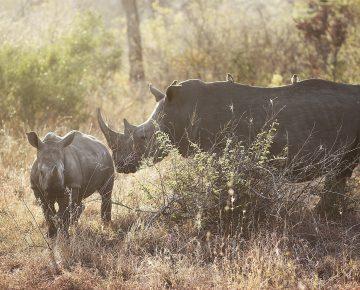 7 Days Rwanda Safari Holiday