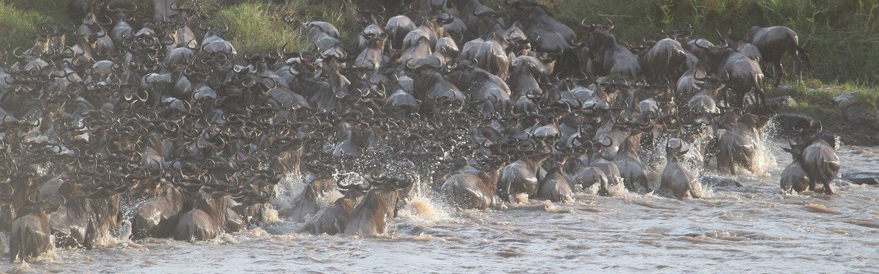 20 Days Holiday Safari in East Africa