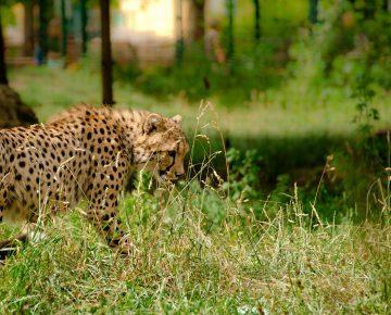 7 Days Bwindi Gorillas & Serengeti Wildlife Adventure