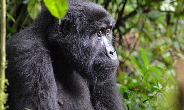 Essential Packing List for Gorilla Trekking