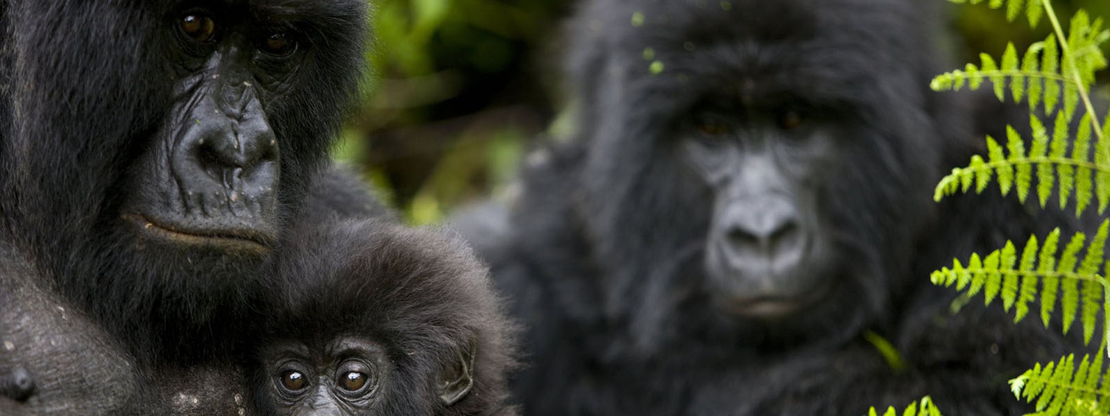 Uganda Group Safaris