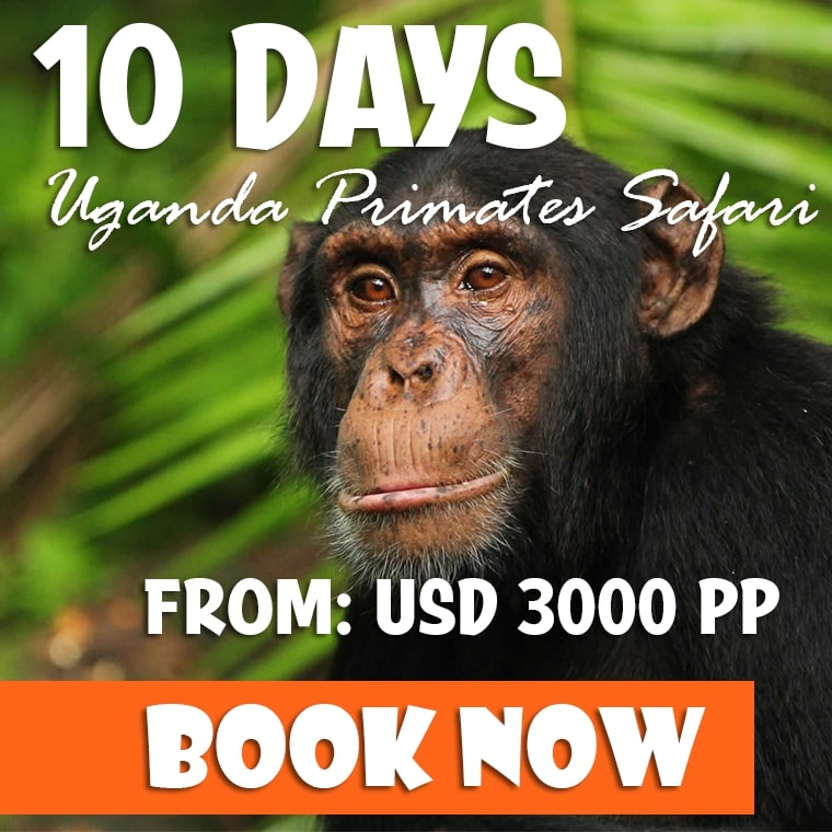 10 Days Uganda Group Safari Offer